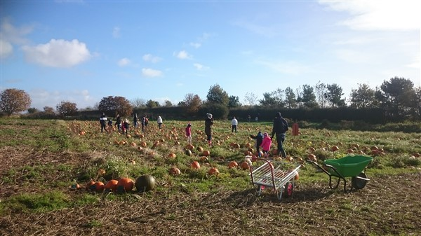 Pick your own pumpkins pumpkin patch east yorkshire driffield beverley hull hornsea bridlington scarborough