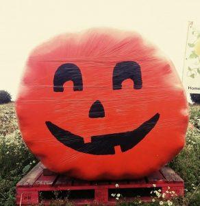 pick your own pumpkins east yorkshire hornsea brandesburton driffield hull beverley