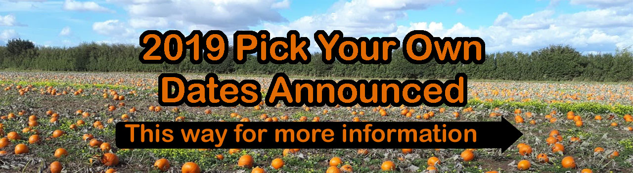 Pick your own pumpkins east yorkshire near me bridlington driffield beverley hull