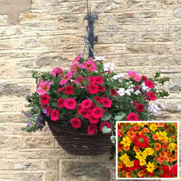 12 inch ready planted hanging basket bright red orange yellow delivery east yorkshire
