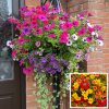 16 inch moss-lined wire hanging basket bright red yellow orange east yorkshire