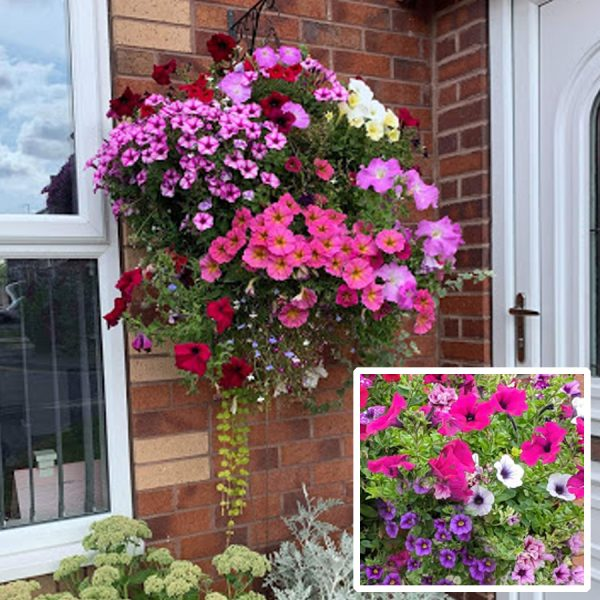 Ready planted plantopia easy fill hanging basket.