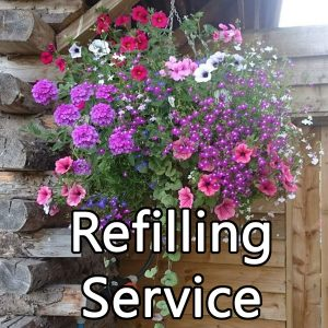 hanging basket refill order online home delivery hanging basket plants for sale delivery east yorkshire hull beverley driffield hornsea