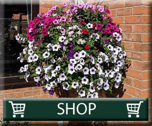 hanging basket plants for sale delivery east yorkshire hull beverley driffield hornsea