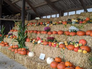 Pumpkin Farm Displays Hull Beverley Bridlington near me East Yorkshire