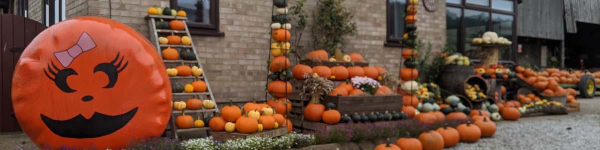 pumpkin farm east yorkshire ull beverley driffield bridlington pumpkin farm near me